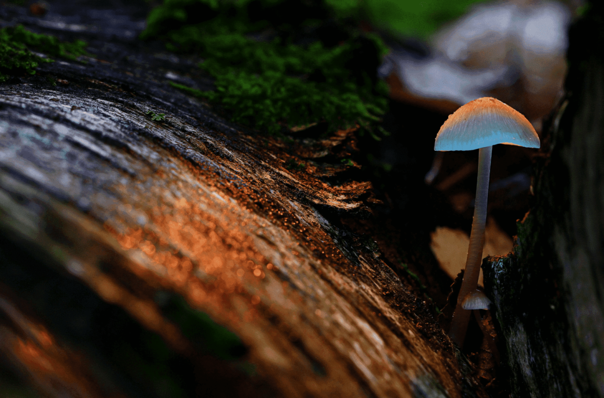 The Benefits and Effects of Psychedelics